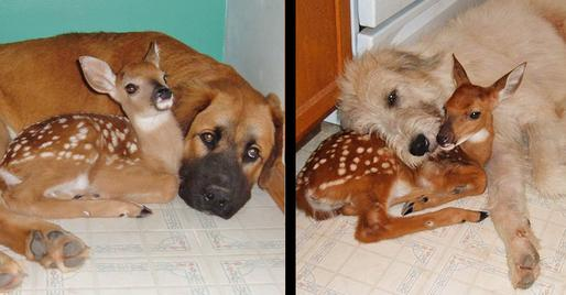 storymaker-amazing-animal-friendships-dogs-cute-1109071-514x268