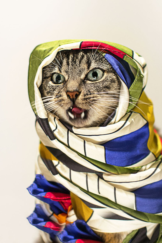 Photographer-Takes-Beautiful-Fashion-Portraits-of-His-Cat__880