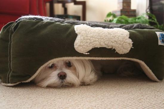 hiding-ninja-funny-dogs-271__605