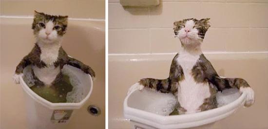 cat-loves-water-bath-4__605