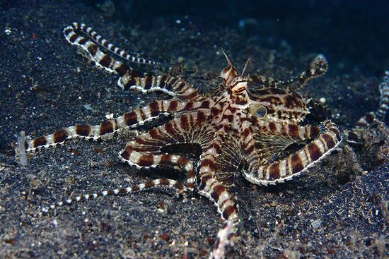 Amazing-Underwater-Weird-Creatures33__880