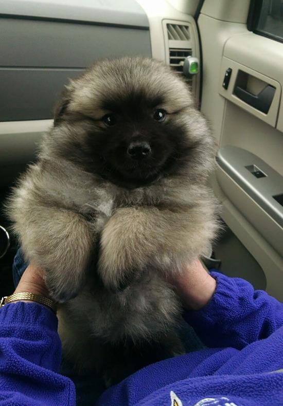 chubby-puppies-bear-cub-look-alikes-2__605