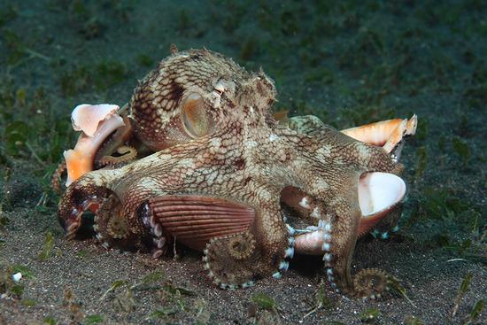 Amazing-Underwater-Weird-Creatures47__880