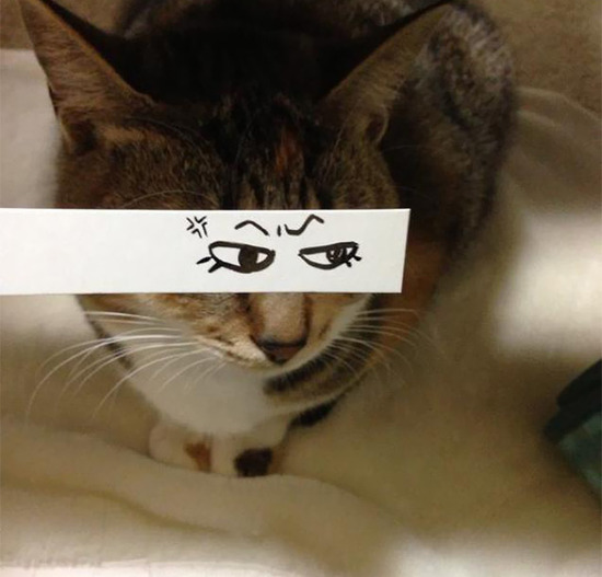 cartoon-anime-eyes-cat-montage-12__605