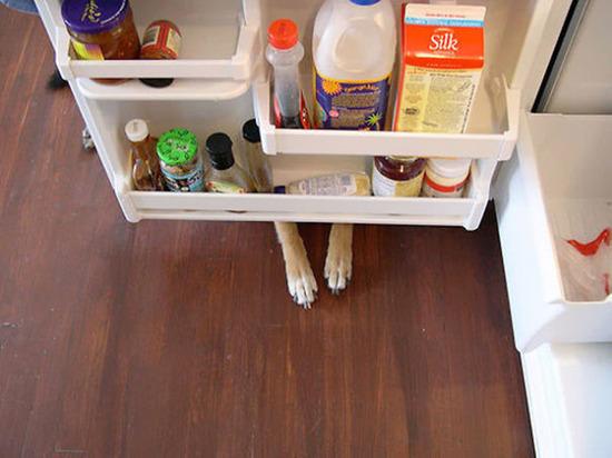 hiding-ninja-funny-dogs-171__605