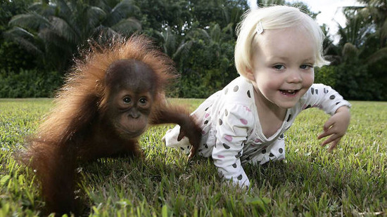 kids-act-like-animals-like-orangutan__605