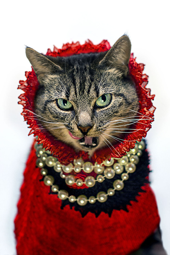 Photographer-Takes-Beautiful-Fashion-Portraits-of-His-Cat9__880