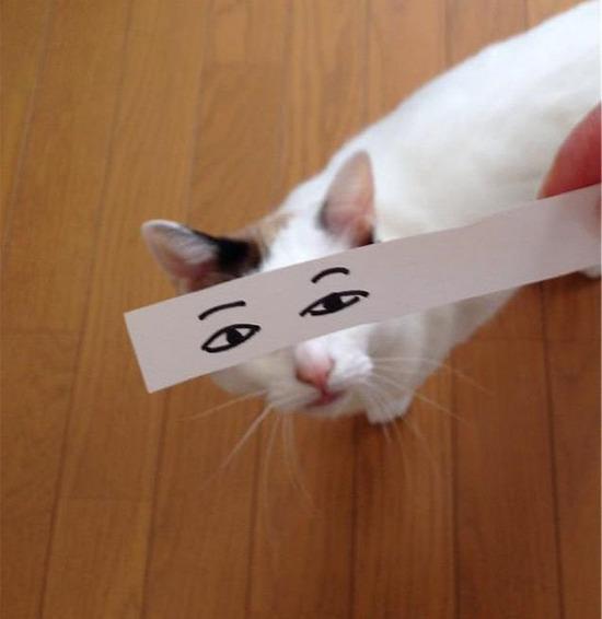 cartoon-anime-eyes-cat-montage-2__605
