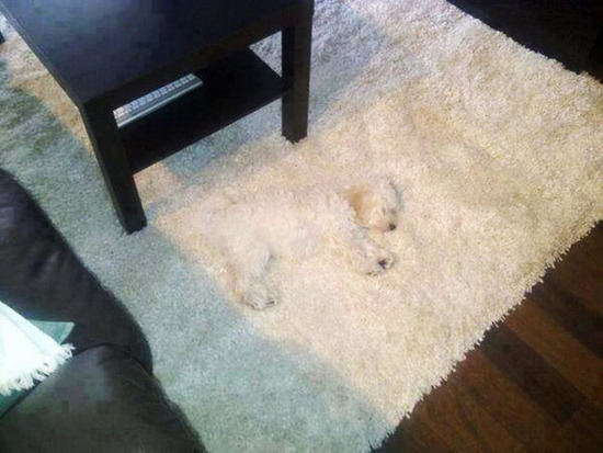 dogs-hide-seek-10__605