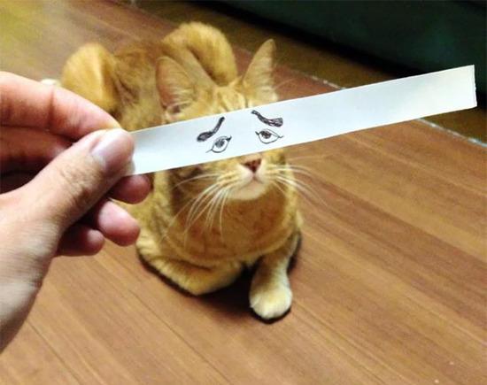 cartoon-anime-eyes-cat-montage-8__605