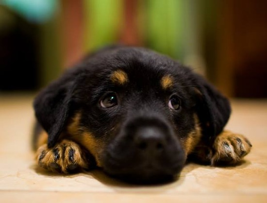 adorable-puppy-picture