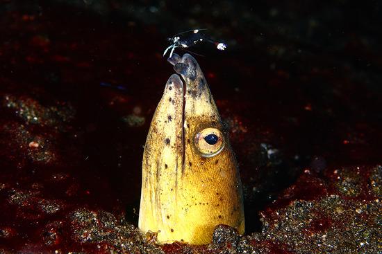 Amazing-Underwater-Weird-Creatures34__880