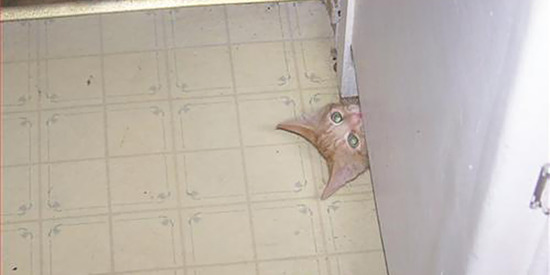 ninja-cat-hiding-funny-50__605