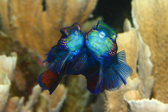 Amazing-Underwater-Weird-Creatures28__880