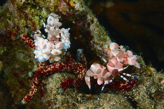 Amazing-Underwater-Weird-Creatures51__880