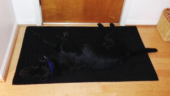 hiding-ninja-funny-dogs-221__605