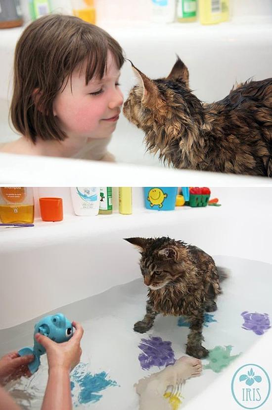 cat-loves-water-bath-421__605