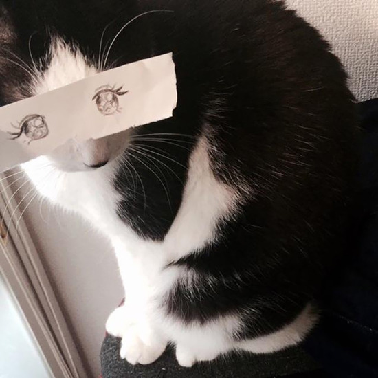 cartoon-anime-eyes-cat-montage-9__605