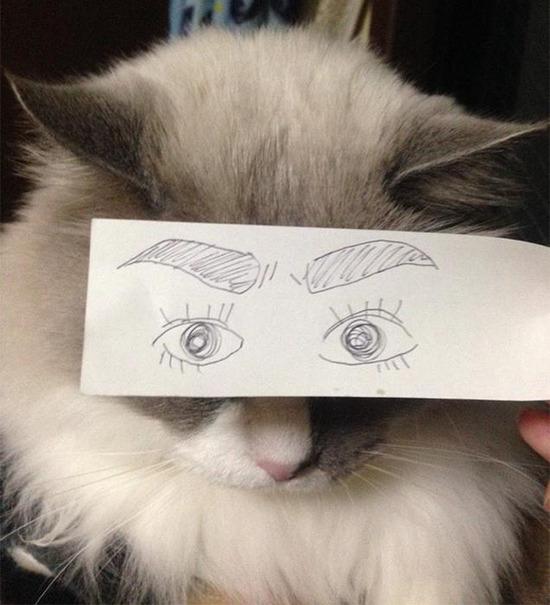 cartoon-anime-eyes-cat-montage-1__605