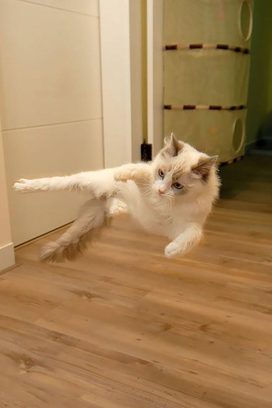 ninja-cat-hiding-funny-102__605