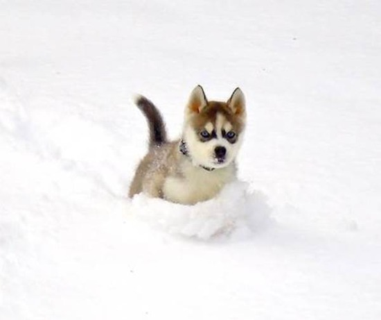 cutest-puppy-pictures-snow