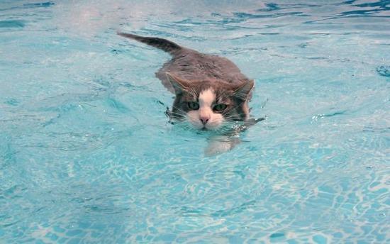 water-cats-animals-swimming-1568212-2560x1600__605