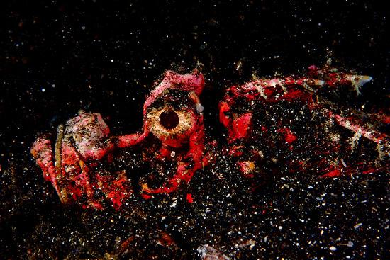 Amazing-Underwater-Weird-Creatures35__880