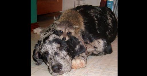 storymaker-amazing-animal-friendships-dogs-cute-1109074-514x268