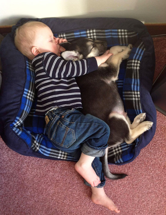 kids-act-like-animals-sleeping-with-puppy__605