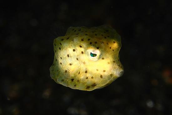 Amazing-Underwater-Weird-Creatures30__880