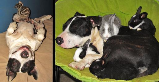 storymaker-amazing-animal-friendships-dogs-cute-1109072-514x268