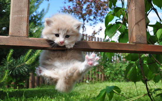 acrobat-kitty-cats-cute-985-1920x1200__605