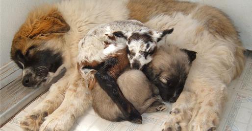 storymaker-amazing-animal-friendships-dogs-cute-1109076-514x268