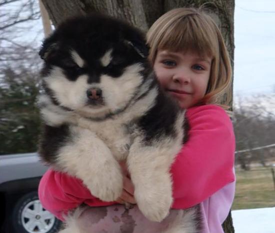 chubby-puppies-bear-cub-look-alikes-12__605
