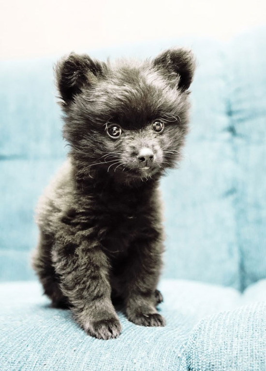 chubby-puppies-bear-cub-look-alikes-20__605