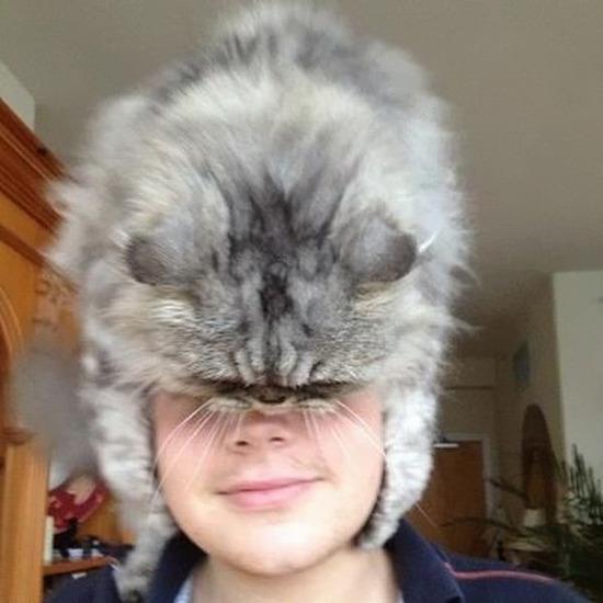 cat-hat-funny-49__605