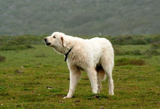 Dog-610x415