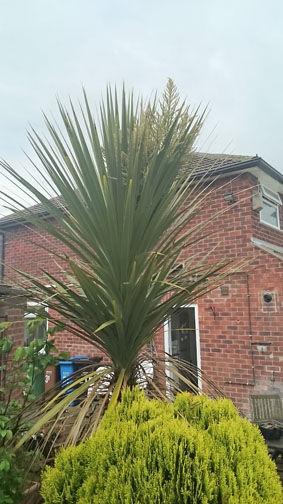 spikey-tree