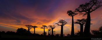 BaobabAlles1