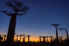 sunset-baobab-trees-29392827
