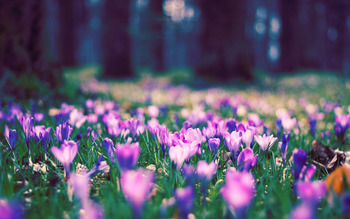 4154609-spring-flower-park