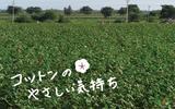 fb8140e2.jpg