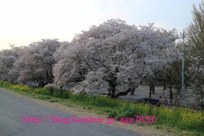 IMG_9198