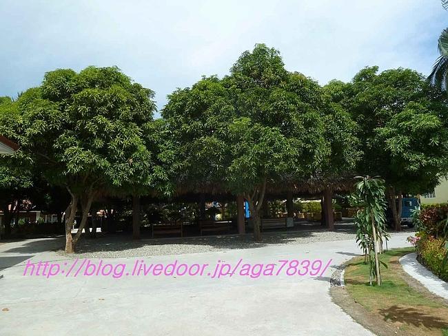 P11906401