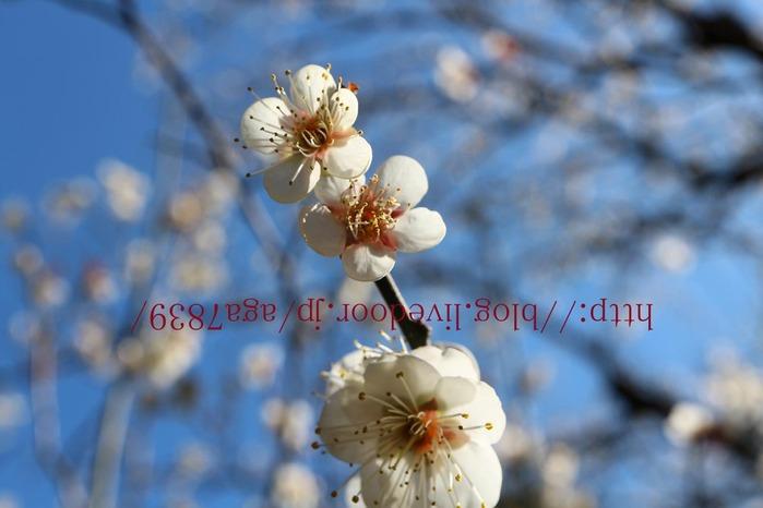 IMG_5064