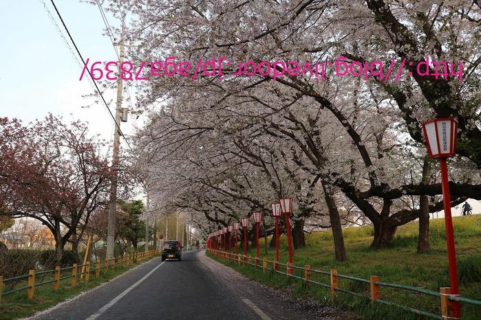IMG_9193