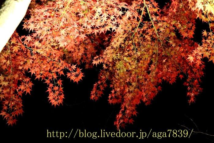 IMG_3055