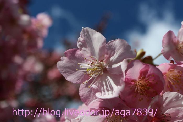 IMG_5499