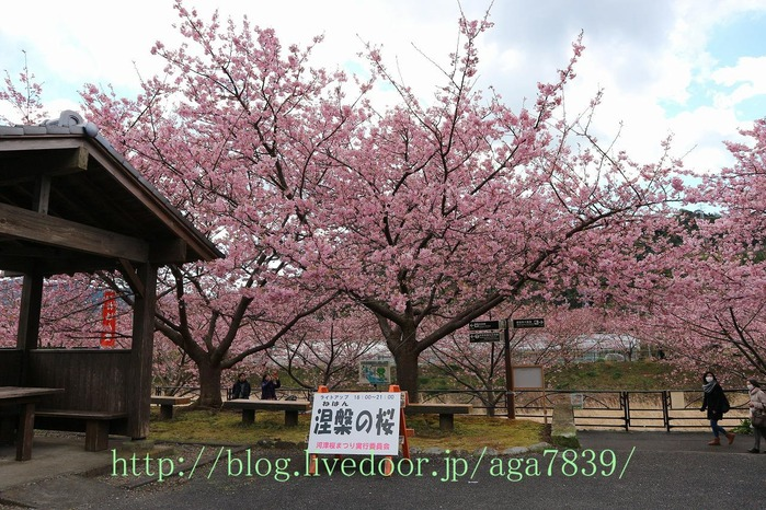 IMG_5584