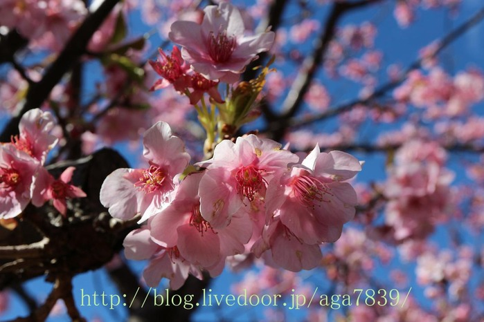 IMG_5445